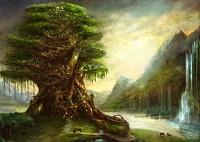 arbor-albero-vita