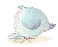 piccione-ciccione