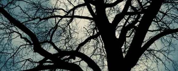 lalbero-senza-foglie