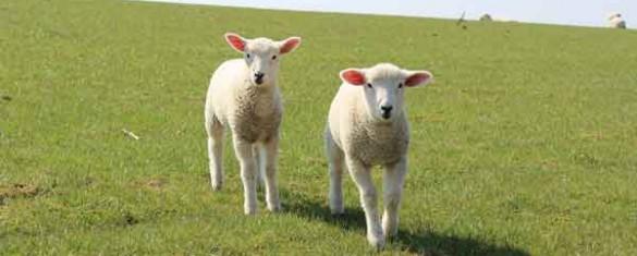 natale-con-i-tuoi-e-pasqua-con-lamb-e-chick