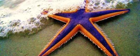 ombrellone-stella-marina