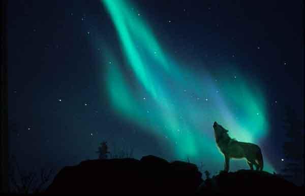 Il richiamo dell 39 aurora boreale ti racconto una fiaba for Ti richiamo