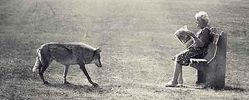 vecchina-lupo