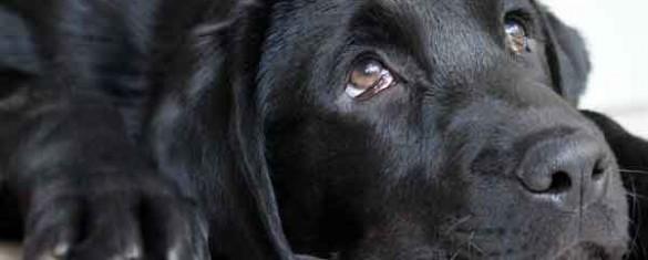 cane-quattro-zampe-per-amico