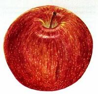 ragazza-mela