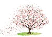 albero-ciliegio