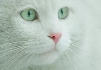 castello-gatti