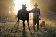 viandante-cane-cavallo