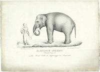 parole-elefante
