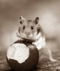 chi-mangiato-mela-dorata