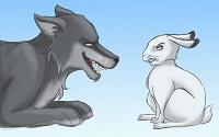 coniglio-matematico