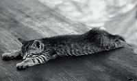 gatto-mezzo
