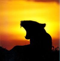 leonessa-riconoscente