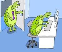 ufficio-tartarughe