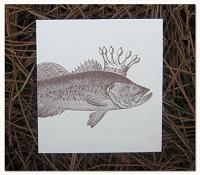 principi-pesci