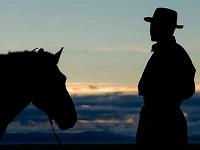 vacchio-cavalieri