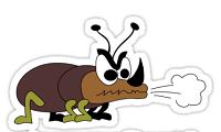 rinoceronte-scarafaggio