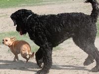 fatine-cuccioli