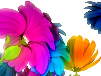 pianta-felicita
