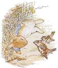 coniglio-pierino