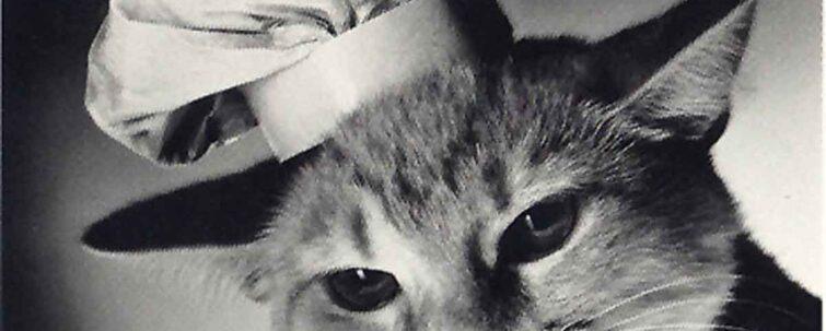 Tutte le fiabe che parlano di gatto - Ti racconto una fiaba